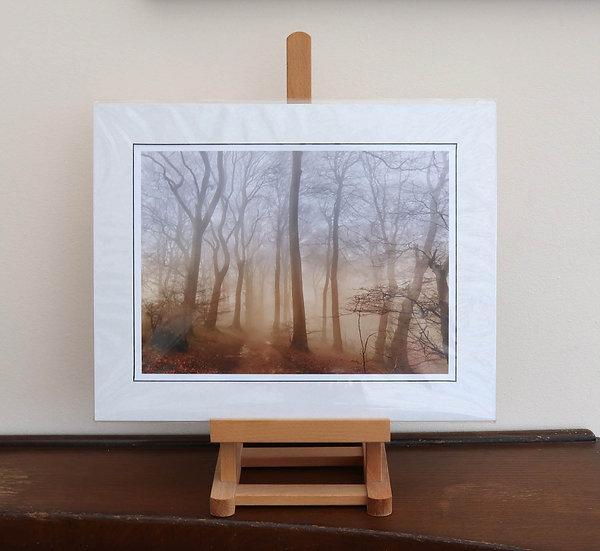 Misty Woodland Mounted Print