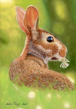 Rabbit Print Small (Mounted Print)