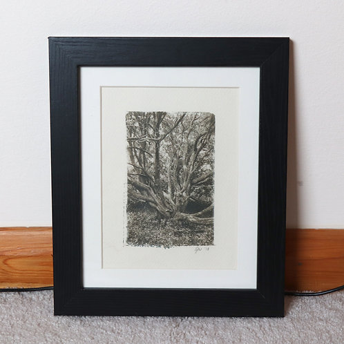Skeletal Tree (Toned Cyanotype Framed Print)