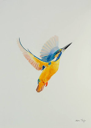 Kingfisher Print (A5 mounted to suit A4 frame)