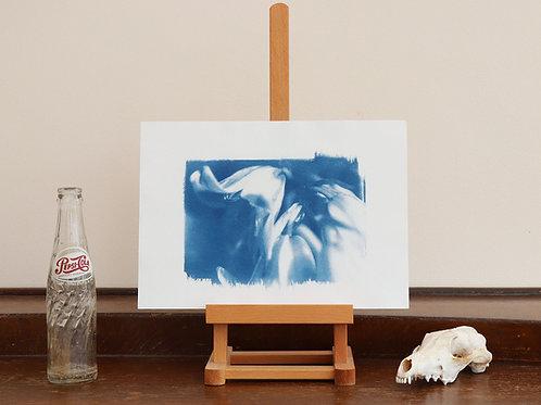 Campanula Cyanotype (Original handmade print)