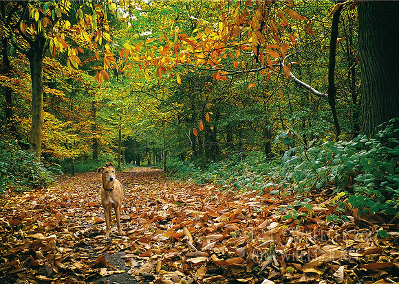 Autumn in the woods (Greeting Card)
