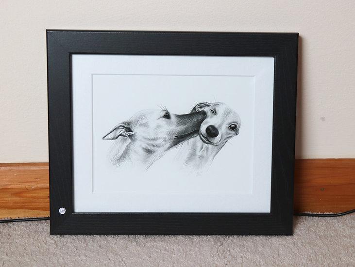 Whippet Kiss (Framed Art Print)
