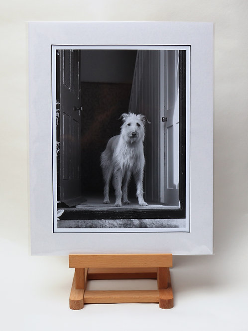 """""""Who's There?"""" Mounted Print"""