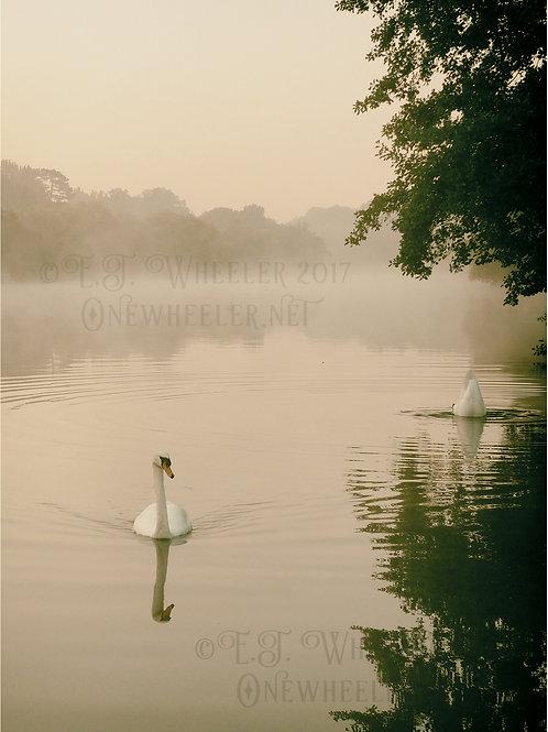 Swans at Pangbourne (Greeting Card)