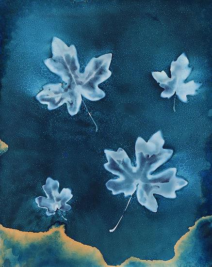 Field Maple Cyanotype Original by Emma Wheeler