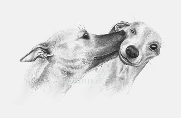Whippet Kiss (Greeting Card)