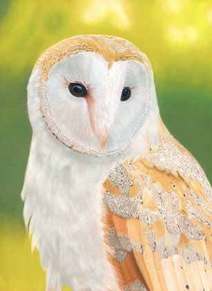 Athena Barn Owl Print (A5 mounted to suit A4 frame)