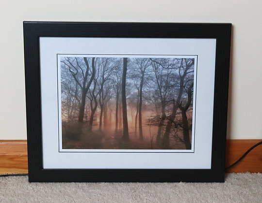 Aston Rowant Woods (Framed Art Print)