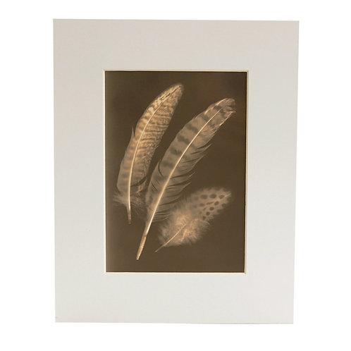 Original Lumen Print Feathers