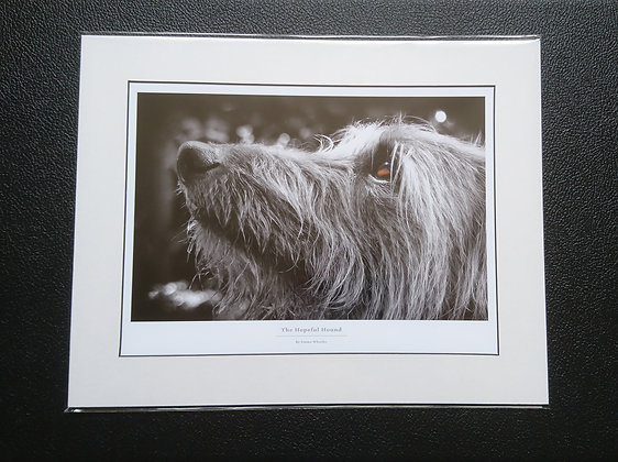 Hairy Lurcher Mounted Print
