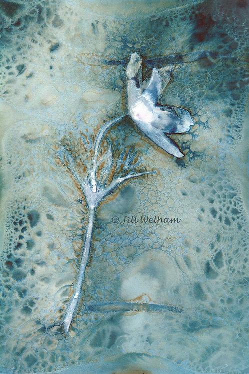 Pulsatilla Cynotype Original by Jill Welham