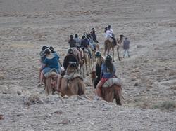 camels desert tour