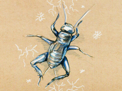Breaking the Ice: How Insects Tolerate Freezing Temperatures