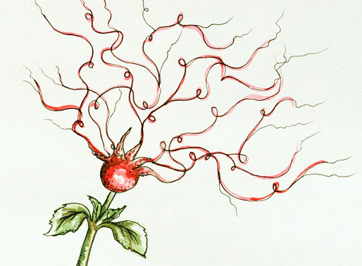 The Newly Discovered Rosehip Neuron May be What Makes Humans Special