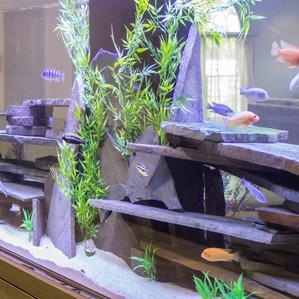 Creekside Aquarium.jpg