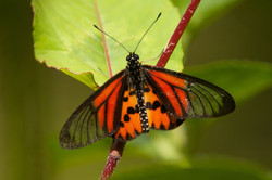 A58_1000_butterfly_mg12a-5764