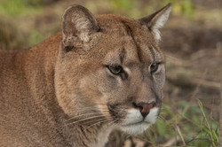 Going Digital Wildlife Photography