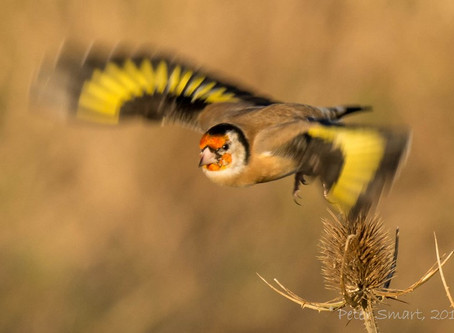 Lincolnshire Birds in Winter