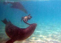 8200_M26_Galapagos_Sealion_IMG_6780