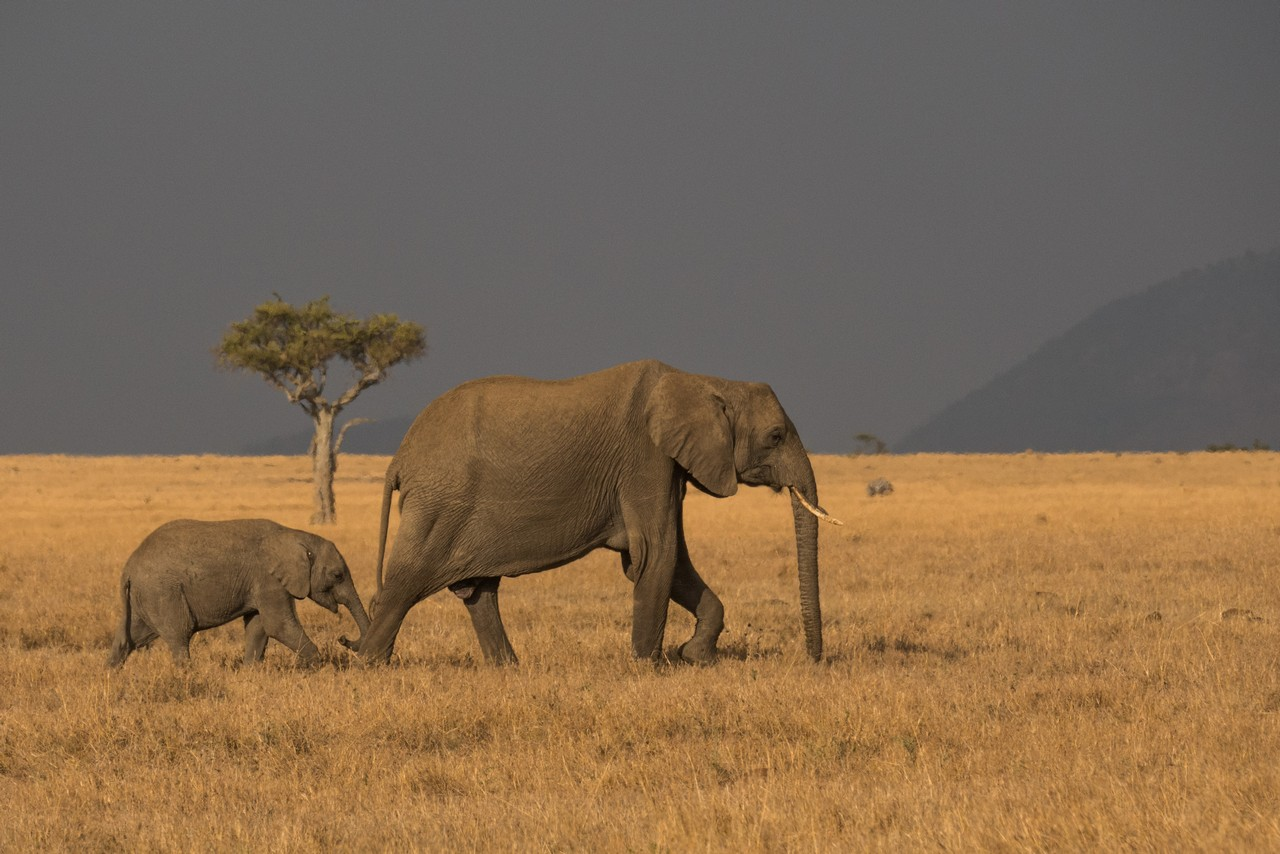 1701_1600_28ky-African_Elephant-1060697