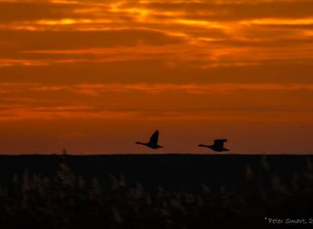 An early morning at Frampton Marsh
