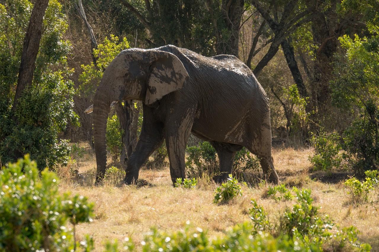 1701_6600_27ky-African_Elephant-1060094