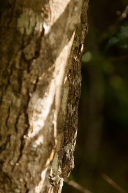 K71_1000_Leaf-tailed_Gecko_mg12a-5753