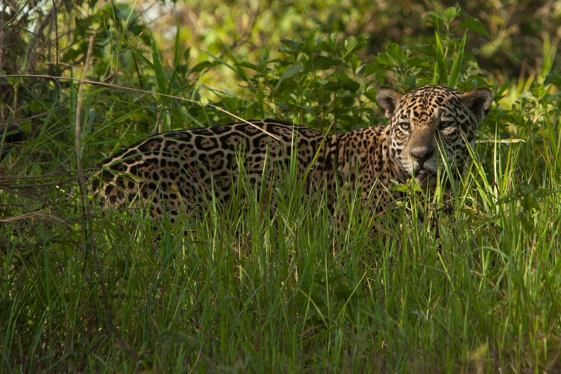 A11_2000_Jaguar_br12a-1458