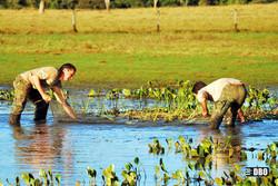 Estudos e Diagnósticos Ambientais