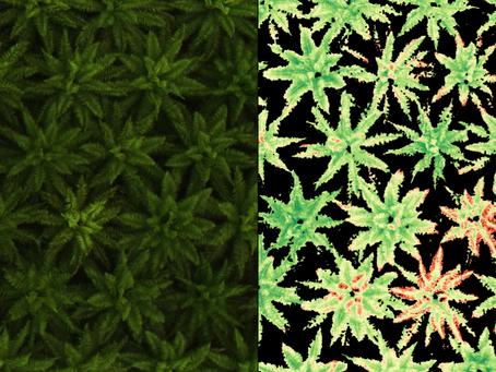 Perbandingan Data Untuk Mendiagnosa Kesehatan Tanaman: RGB, Multispectral, dan Thermal