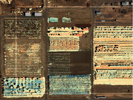 7 Keunggulan Multispectral Data, Plus Rekomendasi Drone Terbaik Untuk Pertanian