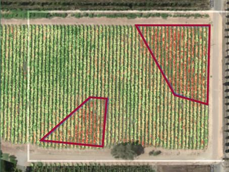 Pemetaan Vegetasi dengan Citra Satelit VS Kamera Multispectral