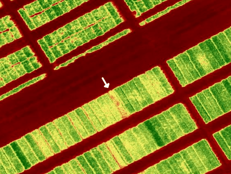 Analisa Pemberian Pupuk dan Pestisida dengan MicaSense RedEdge