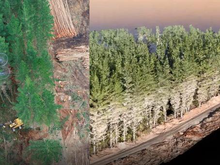 Mempercepat Survey dan Mapping Kawasan Dan Vegetasi Hutan Dengan Drone Serta Hovermap LIDAR