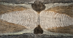 """Whales Tooth, 48"""" x 90"""""""