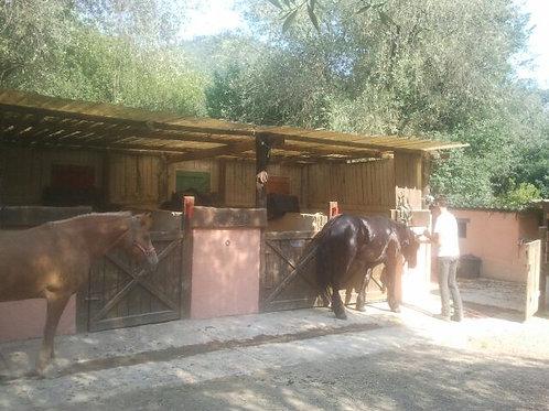 WALKING TOUR & HORSE RIDING