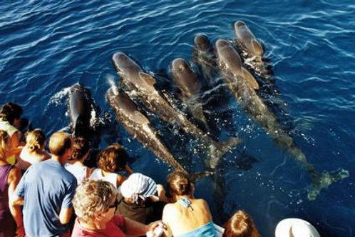 DOLPHIN WATCHING & MONACO SIGHTS