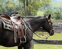 cariboo blue farm horse tack for sale.jp