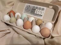 rainbow-hatching-eggs-chicks.jpg