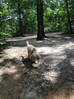 Timber Creek Park: 9-acre Dog Park in New Jersey