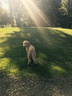 Fetchvana dog walking in Philadelphia