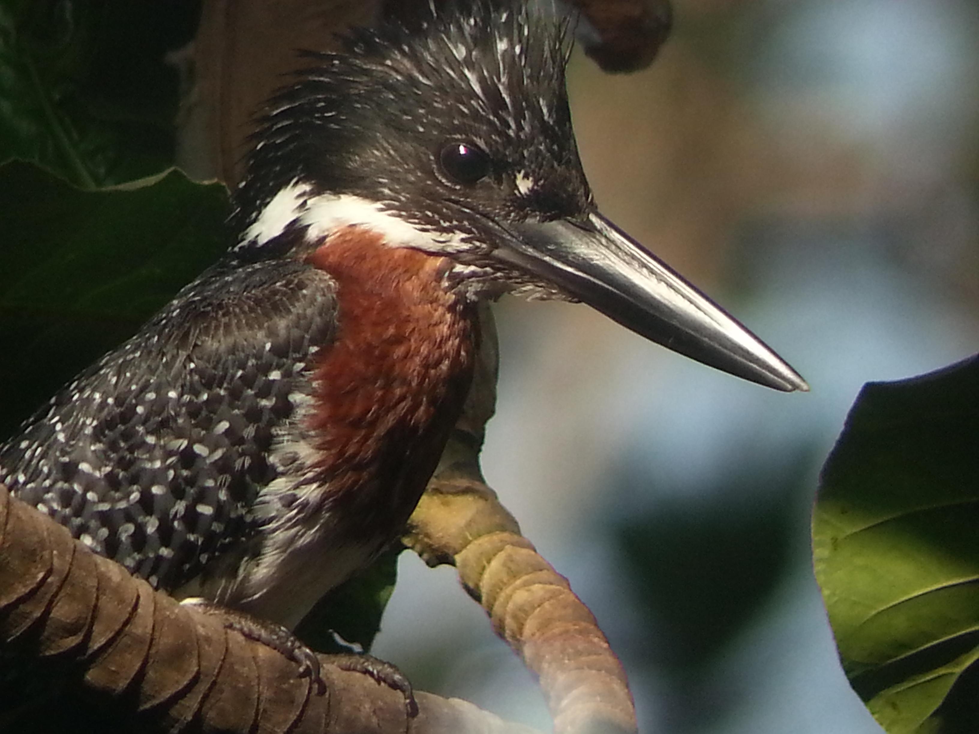 Bird Watching in Gambia