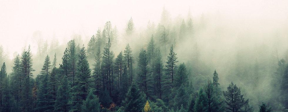 forest_background_27.jpg