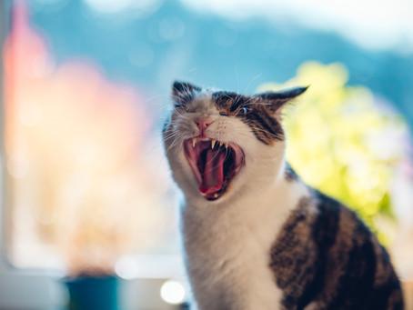 Welches Futter für meine Katze?