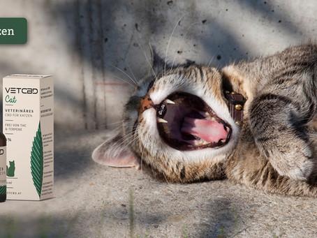 So wirkt CBD Öl bei Katzen
