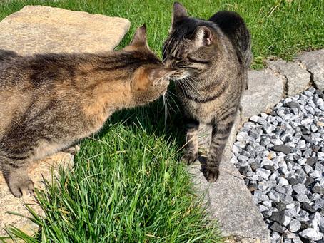 Katzenprobleme, Evelyn erzaehlt