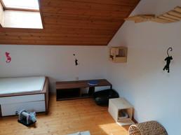 katzenpension-einzelzimmer-2-catscare.jpg