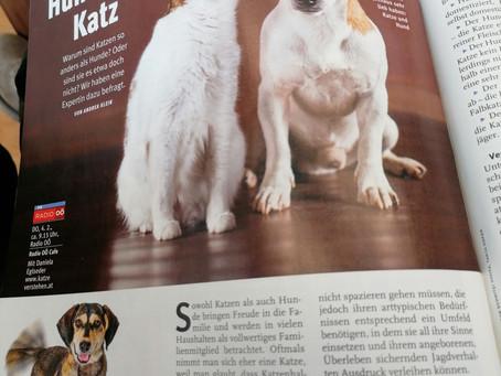 Gemeinsamkeiten und Unterschiede von Hund und Katze
