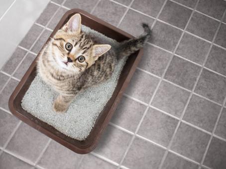 Katzenklo: wie viele, wohin genau und warum?